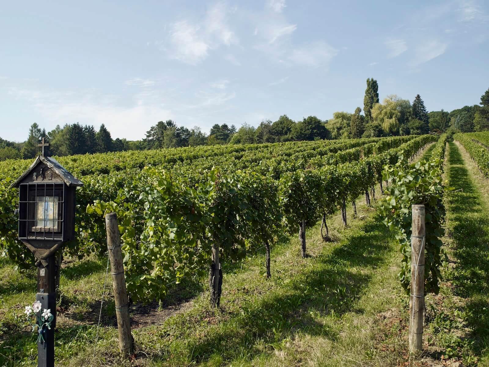 Eigentumswohnung Mauer Wien – Weinreben